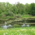 Teich mit Algen, Wiese im Vordergrund, Bäume im Hintergrund - Foto: Bernd Eichhorn