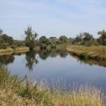 Glatte Wasserfläche mit Bäumen und Gräsern am Ufer - Foto: Bernd Eichhorn