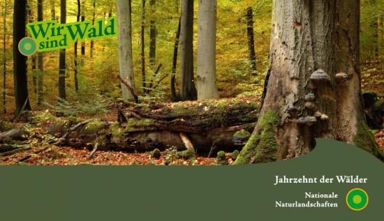 Herbst-im-Hainich_Rüdiger-Biehl-JZDW-Version