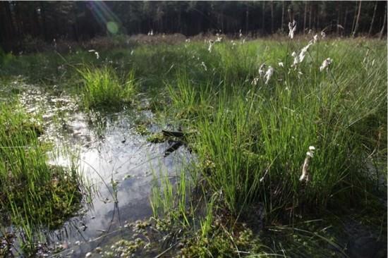 Wolgraswiese im Rabenluch