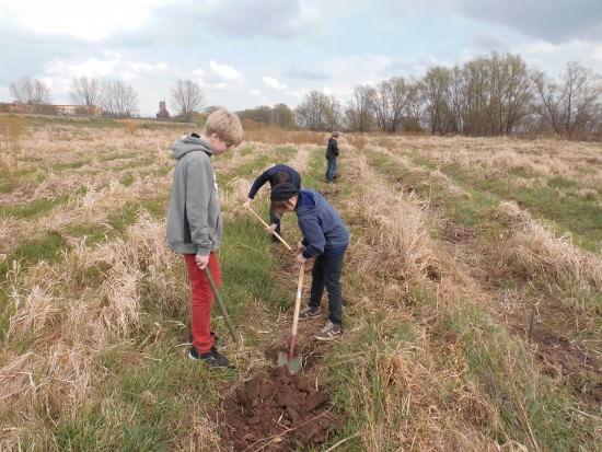Kinder pflanzen Weiden