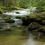 Flusslauf im Naturpark Bayrischen Wald - Foto: U. Reißenweber