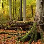 Herbst im Hainich - Fotto: Rüdiger Biehl